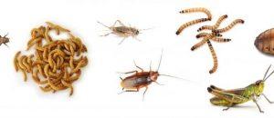 krmný hmyz seřazený podle velikosti