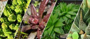 sukulenty jako rostliny do terária