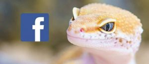 gecko-2299365_1920 (1)