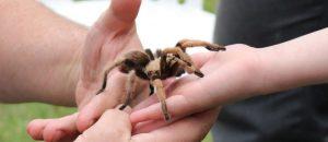 hand-animal-wildlife-pet-insect-halloween-740087-pxhere.com-compressor